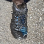 mud-foot